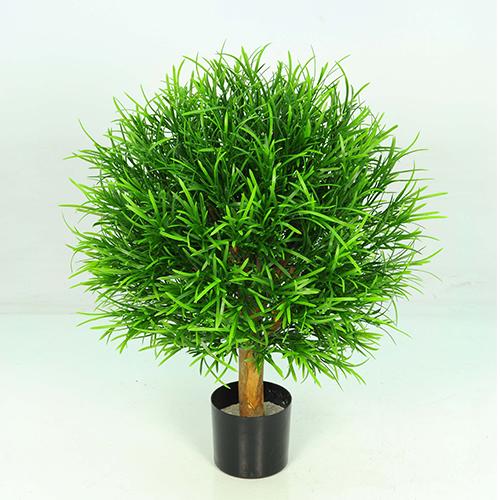 40cm X 40cm Podacarpis Ball Tree w182 lvs