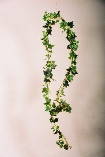 9 Varigrated Ivy Gardland