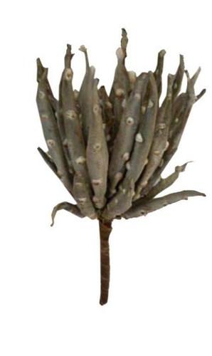 Fossil Succulent Green