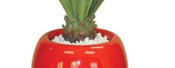 Silk Office Plants & Pots