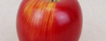 Silk Fruits & Vegetables